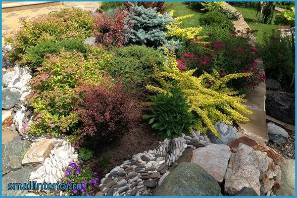 барбарис тунберга в саду фото